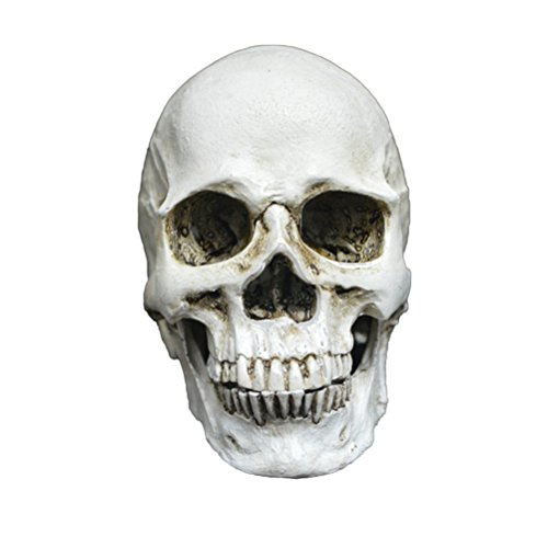 LUOEM Mini Resin Human Skull Replica Skeleton Model With Removable Teeth Funny Halloween Costumes Hounted House Scary Creepy Prop Masquerade Decoration Ornaments -