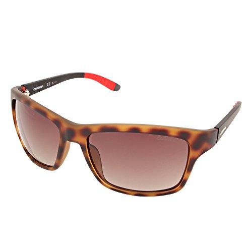 Brown Pz Carrera Sf Hvna S Sonnenbrille Mtblack 8013 Negro CARRERA zfpq0