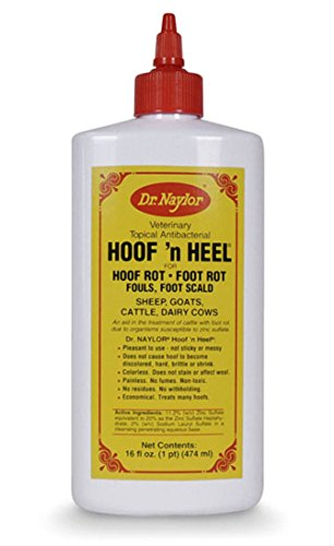 Hoof Liquid (Dr. Naylor Hoof n' Heel (16 oz.) - Traditional Foot Rot Treatment)