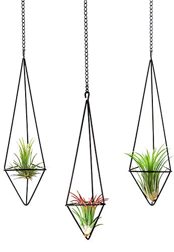 Mkono 3Pcs Hanging Air Plant Holder Himmeli for Tillandsia Airplants Display (with Chains), Black by Mkono