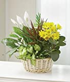 Eternal Affection - Same Day Sympathy Flowers Delivery - Condolence Flowers - Funeral Flower Arrangements - Sympathy Plants