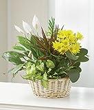Wondrous Nature - Flowers For Sympathy - Sympathy Flower Arrangements - Sympathy Plants - Same Day Sympathy Flowers - Condolence Flowers