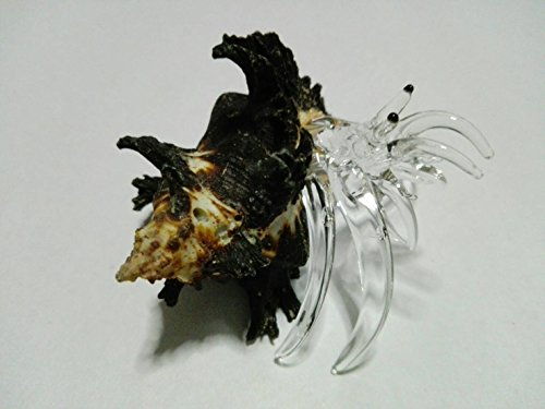 Cracker Jack Box Costume (Rare item Nice glass blowing Hermit Giant crab natural seashell (Conch) : (M$M shop) black)