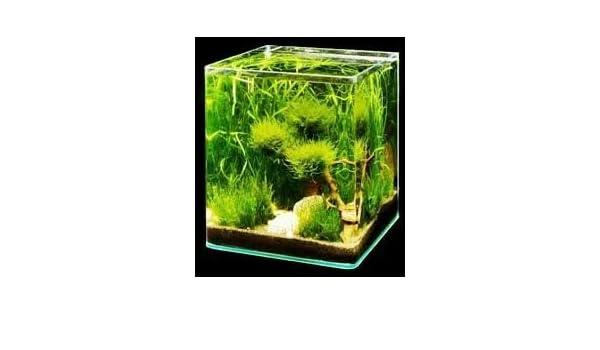 Acuario 10 litros cristal de una pieza: Amazon.es: Productos para mascotas