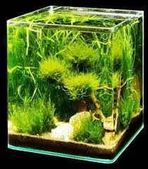 Acuario 10 litros cristal de una pieza