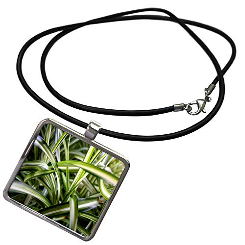 3dRose TDSwhite - Miscellaneous Photography - Spider Plant Jungle Variegated Leaves - Necklace with Rectangle Pendant (ncl_296915_1) ()