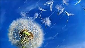La semilla del diente Balcón y Patio Planta de tiesto de Bonsai Multi-colores de la flor que planta el germen temporada Perenne árbol Semillas 50 PC 19