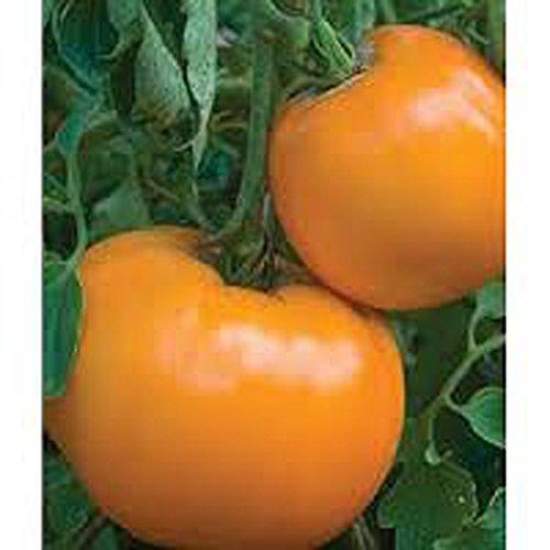 Brandywine Tomato Plants - TOMATO, JUBILEE TOMATO SEED, ORGANIC, NON- GMO, 25 SEEDS PER PACKAGE