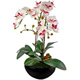 "Red Vanilla OF064-100 Phalaenopsis White Orchid Centerpiece/Black Base,30"" X 20.75"""