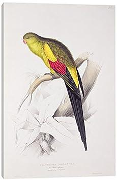 iCanvasART Black-Tailed Parakeet Print 26 x 18