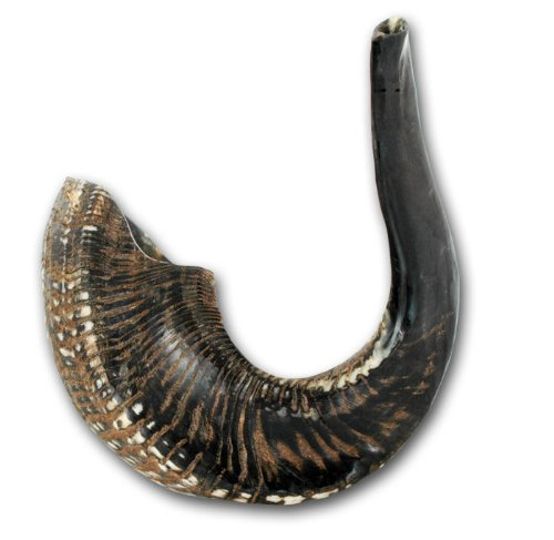 Ram's Horn Shofar Kosher Medium size 15.5 Natural Black/Dark Sho-1292