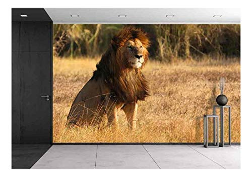 wall26 - Old Lion in Sunset Light - Removable Wall Mural | Self-Adhesive Large Wallpaper - 66x96 inches