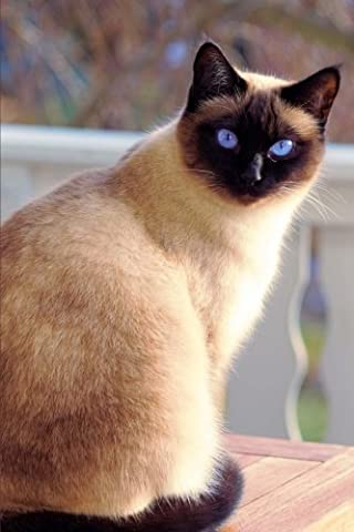 Seal Point Siamese Cat is Looking at You Pet Journal: 150 Page Lined Notebook/Diary - Seal Point Siamese Cats