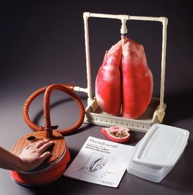 Nasco / Fort Atkinson - Ls03765dim - Demonstration Inflatable Lungs Kit (kit Of (Inflatable Lungs Kit)
