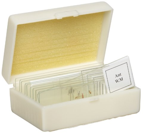 American Educational 10 Piece Glass Prepared Microscope Slide Animal Set