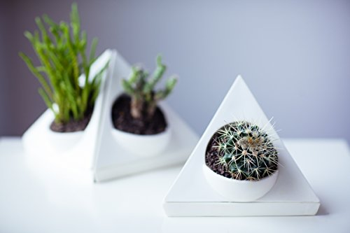 White Beluga Single (Unique Ceramic Planter Pot for Succulent Cactus and Airplant - Includes Self Watering Saucer Drip Tray, Drainage Hole, Triangle Corner Shape, Matte White 6-Inch (Single))