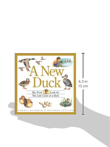 A New Duck (My First Look at)