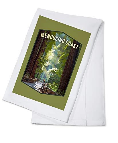 Mendocino, California - Pathways in Redwood Forest - Contour 98104 (100% Cotton Kitchen Towel)