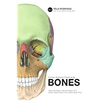 Human Anatomy Flashcards: Bones