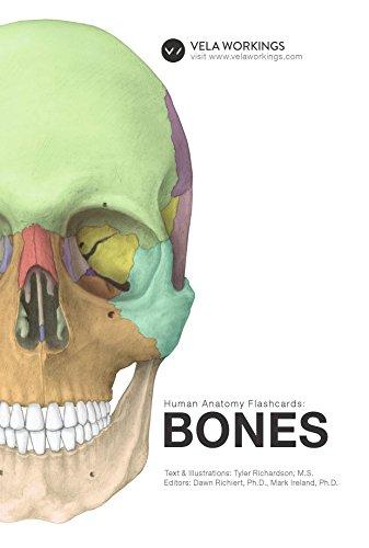 Human Anatomy Flashcards: Bones eBook: Tyler Richardson, Dawn ...