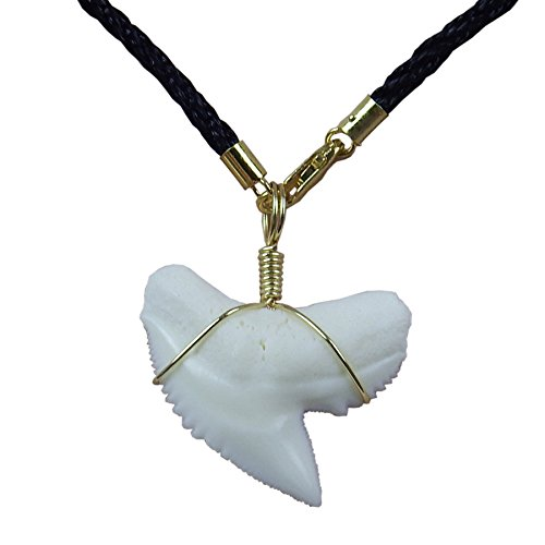 - GemShark Shark Tooth Necklace Real Tiger Sharks Week 14 K Gold Pendant Choker with Black Cord Chain (1.2 inch Tiger)