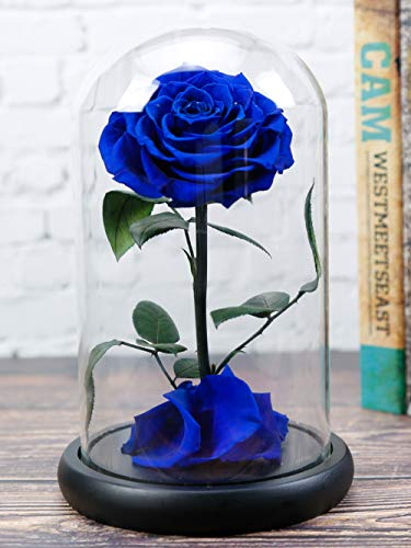 Dear her Beauty and The Beast rose Handmade Preserved Flowers Forever Roses Bluelover in Glass Dome Gift Box Best Gift for Her, Anniversary Valentine Birthday Wedding, for Girls Wife Mother Lover