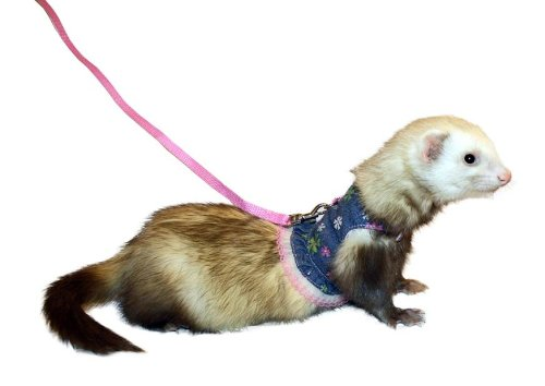 Marshall Ferret Pet Bell - Marshall Ferret Fashion Lead