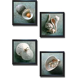 411qPyzCjEL._SS300_ Best Sand Dollar Wall Art and Sand Dollar Wall Decor For 2020