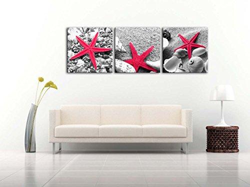Red Starfish Wall Decor : Still life of starfish shells on sandy beach in black