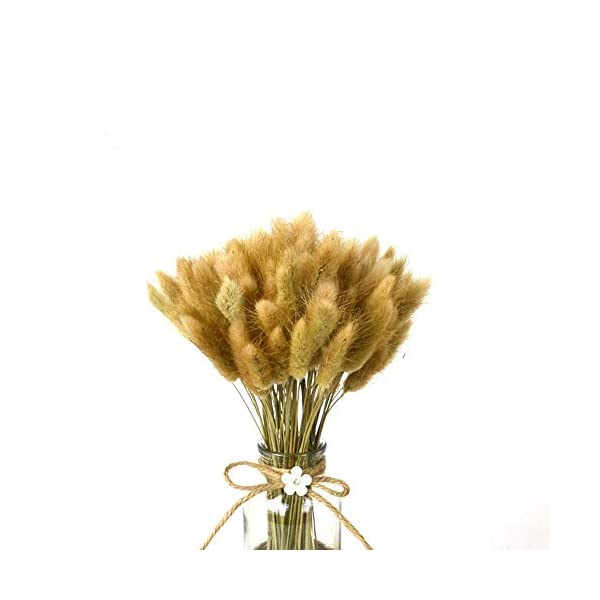 100 Pcs Dried Flowers Natural Setaria Viridis Decorative Foxtail Grass Bouquet, Dry Dog Tail Grass , Preserved Pampas Grass Plants Table Decoration Accessories Party Beach Theme Decorations(Nature)