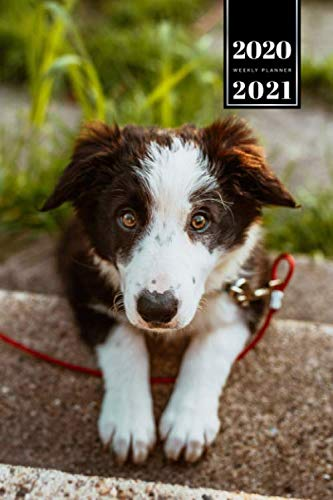 Border Collie Dog Pup Puppy Doggie Week Planner Weekly Organizer 2020 / 2021 - Lying on Stairs: Animal Lover Pet Owner Gift Idea - Schedule Notebook Journal in 6' x 9' Inch