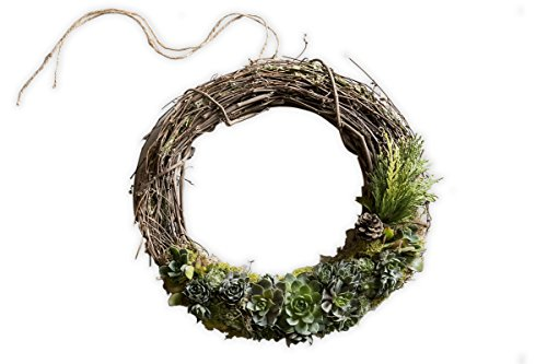 Furrow & Vine - 14'' Living Holiday Succulent Grapevine Wreath by Furrow & Vine