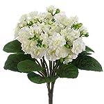 12-Silk-African-Violet-Flower-Bush-White-pack-of-12