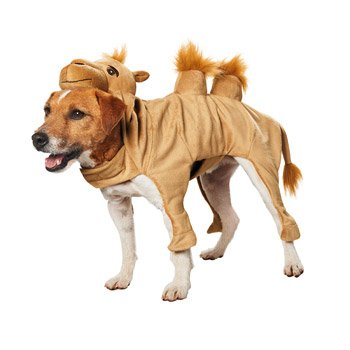 Petco Halloween Camel Dog Costume, (Petco Dog Costumes)