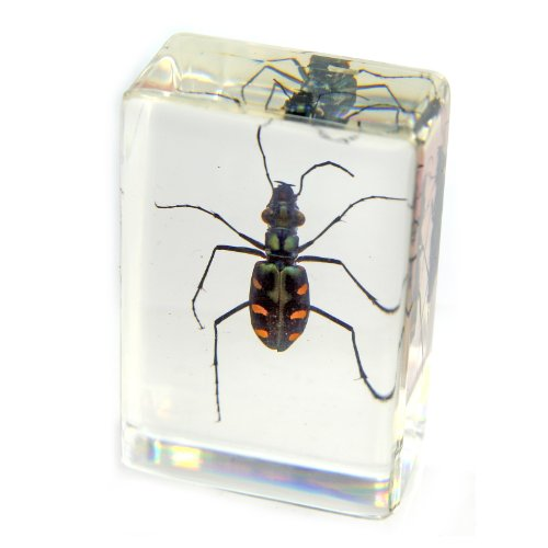 Green Tiger Beetle Paperweight (1 1/8 x 1 3/4 x 3/4