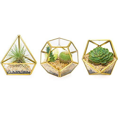 Mkono 3 Packs Mini Glass Geometric Terrarium Container Modern Tabletop Planter Window Sill Decor DIY Display Box Centerpiece Gift for Succulent Fern Moss Cacti Air Plants Miniature Fairy Garden, Gold (Terrarium Plants And Containers)