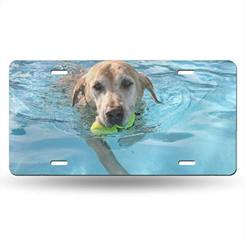 Charm Trend Labrador Dog Swim Play Baseball License Plate, High Gloss Aluminum Novelty Plate Tags, 5.9 L X 11.8 W Inches ()