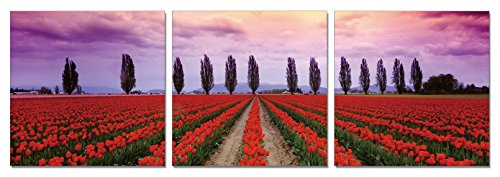 SLS Vision. Tulip Haven. 48 x 16 inches. Ready to Hang. Contemporary Art Modern Wall Decor, 3 Panel Commercial Grade Machine Framed Giclee Canvas Print. Home Decoration Painting. A1203 (Dining Haven Grand)
