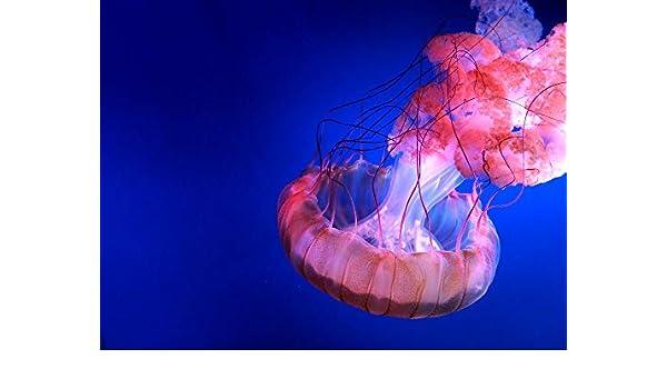 WACYDSD Pintar por números Acuario Animal Medusas Pintura al óleo ...