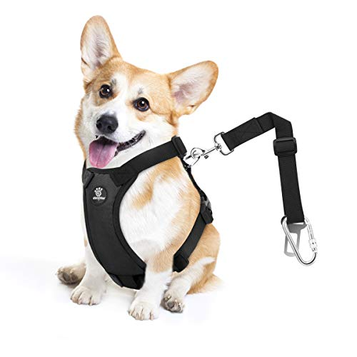 Pawaboo Dog Safety Vest Harness Small Easy Control for Driving Traveling Safety for Small Medium Dogs Cats Pet Car Harness Vehicle Seat Belt with Adjustable Strap and Buckle Clip Navy BLUE//WHITE