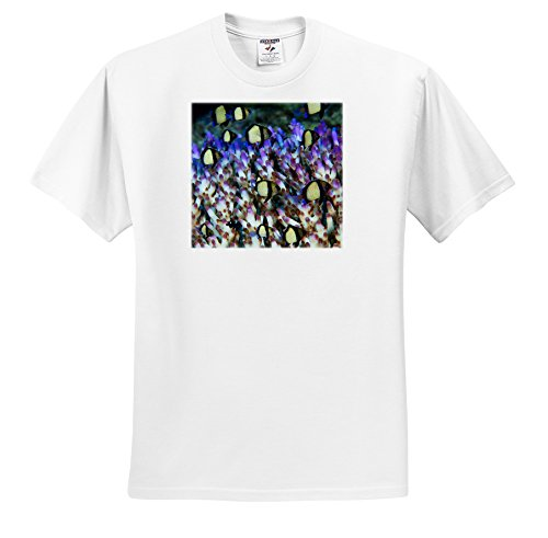 - Danita Delimont - Fish - Indonesia, Raja Ampat, Humbug fish, Marine Life-AS11 BJA0209 - Janyes Gallery - T-Shirts - Adult T-Shirt XL (ts_71932_4)