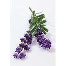 Smart Garden refill, 3-pack, Lavender