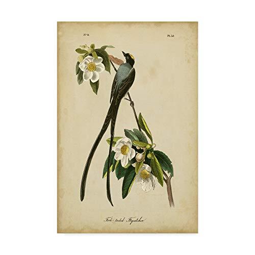 Fork James Audubon John (Trademark Fine Art WAG00912-C3047GG Fork-Tailed Flycatcher by John James Audubon, 30x47-Inch, 30x47, Multicolor)