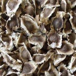 モリンガ 種 分かりやすい栽培方法付き プランター植え可 種まき時期4月~7月 (550g) B07B94C5R9