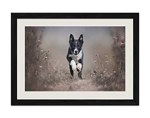 KaoHun Black Puppy Border Collie Runs - Black Wood Frame Prints Posters 16x24 inches
