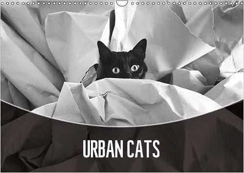 Urban cats 2018 black and white photography calvendo animals 3rd edition edition
