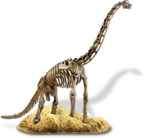 Edu-Toys Brachiosaurus Skeleton Model Kit| Assemble and Display | Start your own Dinosuar Museum | True To Life Skeleton -