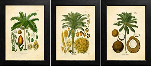 Ink Inc. Palm Tropical Botanical Prints Vintage Wall Art Drawing, Set of 3, 8x10, Unframed