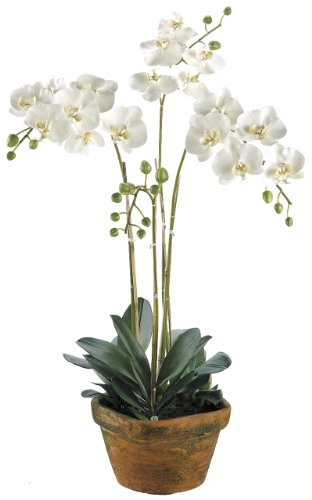 Silk-Decor-Phalaenopsis-Plant-White