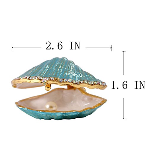 The 8 best seashell collectibles